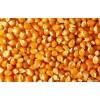 飼料廠賈經理現款求購大量黃玉米